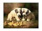 Sealyham Puppies and Ducklings Gicléetryck av Lilian Cheviot