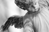 Angel Photographic Print by  French School