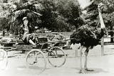 Woman Driving an Ostrich Carriage at the Ostrich Farm, Los Angeles, California, c.1920 Reproduction photographique