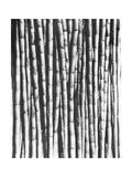 Sugar Cane, Mexico, 1929 Valokuvavedos tekijänä Tina Modotti