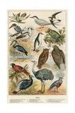 Oiseaux Reproduction procédé giclée par  English School