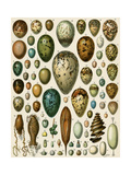 Eggs of Some Birds and Turtles  and Seed Cases of Bryophites and Some Other Plants