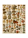 Mushrooms and Other Fungi Giclée-tryk