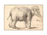 An Elephant Giclée-tryk af  Rembrandt van Rijn