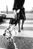 Dalmatian on a Leash Photographic Print by Walter Chin
