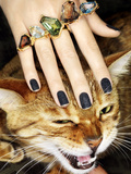 Cat and Rings Photographic Print by Graeme Montgomery