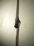 Silk Stocking Silhouette Fotografie-Druck von Graeme Montgomery