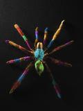 Rainbow Spider Fotografie-Druck von Graeme Montgomery