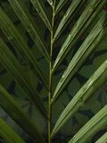 Palm Close-up Fotografie-Druck von Graeme Montgomery