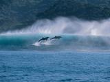 Common Dolphins Breaching in the Sea Fotografisk trykk av Green Light Collection