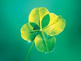 Close Up of Green Leaf Sprig on Dark Teal Valokuvavedos