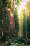 Albert Bierstadt The Big Trees Mariposa Grove California Plastic Sign Signe en plastique rigide