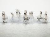 White Horses I Giclee Print by Irene Suchocki