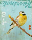 Bird VI Giclee Print by Kareem Rizk