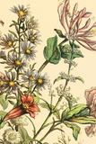 Furber Flowers IV - Detail Giclée-tryk af Robert Furber