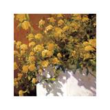 Yellow Geraniums Impressão giclée por Philip Craig