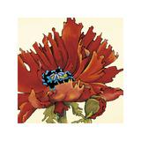Firelight II Giclee Print by Lynn Kelly