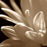 White Flower Posters