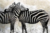 Zebraer Posters