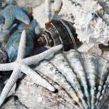 Seachells in Blue II Prints