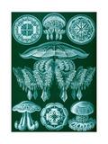 Examples of Discomedusae from 'Kunstformen Der Natur', 1899 Gicléedruk van Ernst Haeckel