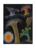 Anemones and Stalked Jellyfish Giclée-Druck von Philip Henry Gosse
