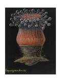 Devonshire Cup Coral Giclee Print by Philip Henry Gosse