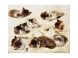 A Study of Kittens, 1898 Giclee Print by Henriette Ronner-Knip