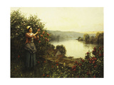 Summer Blossoms Giclee Print by Daniel Ridgway Knight