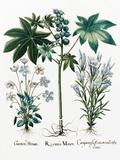 Castor Oil Plant Reproduction photographique par Georgette Douwma