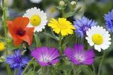 Cornfield Weed Flowers Fotoprint van Bob Gibbons