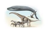 Largest Animals Size Comparison Photographic Print by Jose Antonio