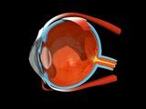Eye Anatomy Fotografie-Druck von Jose Antonio