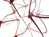 Nerve Cells Reproduction photographique par Christian Darkin