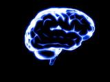 Human Brain Photographic Print by Christian Darkin