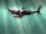 Megalodon Shark And Great White Reproduction photographique par Christian Darkin