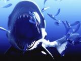 Megalodon Prehistoric Shark Reproduction photographique par Christian Darkin