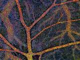 Brain Tissue Blood Supply Photographic Print by Thomas Deerinck