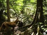 Tasmanian Wolf In Forest Reproduction photographique par Christian Darkin