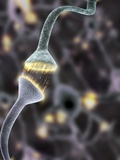 Nerve Synapse, Artwork Photographic Print by Equinox Graphics