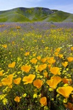 Shell Creek, California Fotoprint van Bob Gibbons