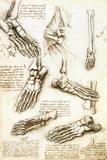 Foot Anatomy by Leonardo Da Vinci Fotografisk trykk av Sheila Terry