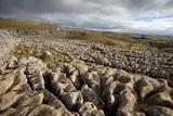 Limestone Pavement, Yorkshire Fotoprint van Bob Gibbons