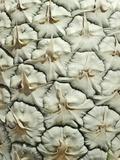 White Pineapple Valokuvavedos tekijänä Neal Grundy
