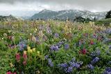 Wildflower Meadow Fotoprint van Bob Gibbons