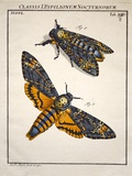 1744 Death's Head Hawkmoth by Rosenhoff. Photographic Print by Paul Stewart
