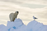 Polar Bear And Seagull Photographic Print by Louise Murray