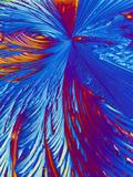 Cholesterol Crystals Fotografisk tryk af  PASIEKA