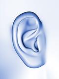 Human Ear Photographic Print by  PASIEKA