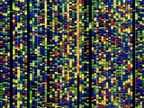 Computer Screen Showing a Human Genetic Sequence Photographic Print by David Parker
